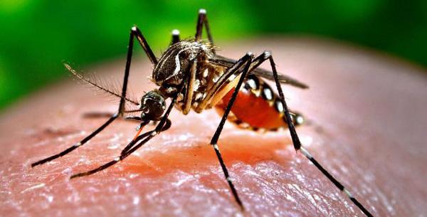 Dengue : les personnes asymptomatiques participent à la transmission du virus