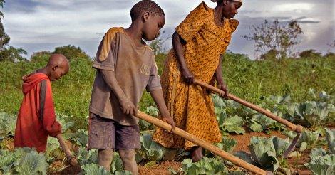 Besoins de la campagne agricole : Vers l'intégration du coût de suivi de la comptabilité