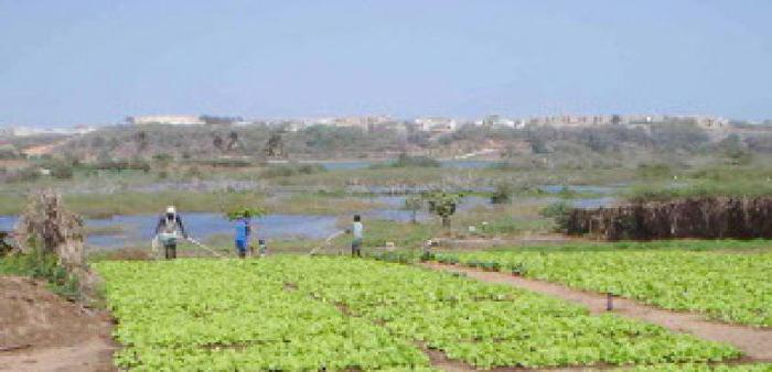 AGRO-BUSINESS : L'Etat octroie 1 000 hectares à des multinationales