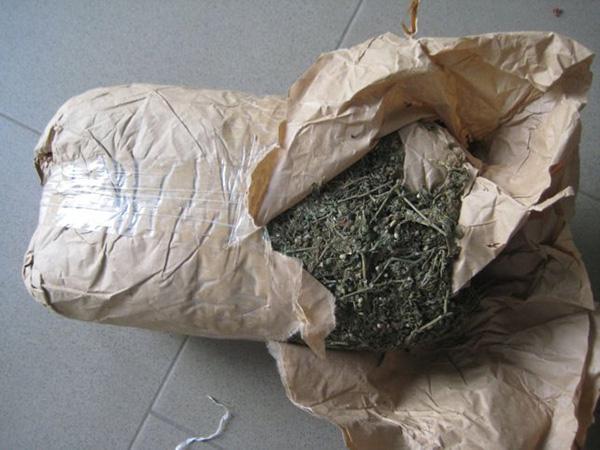 Podor : 113 kg de chanvre indien saisis