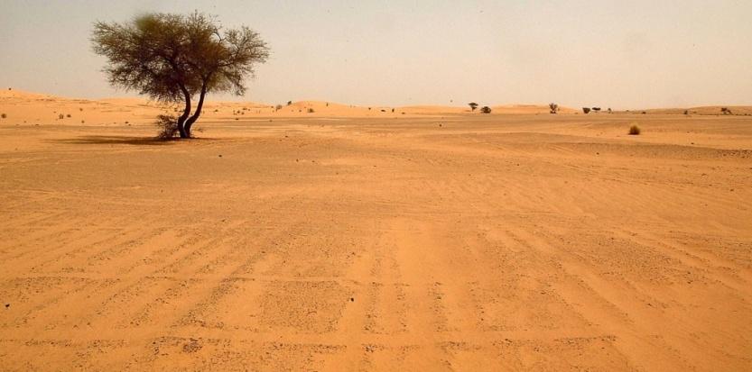 Libye: 36 000 enfants migrants à sauver du désert