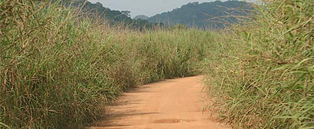 Diacounda (Casamance) : Des topographes et leurs guides enlevés, puis relaxés