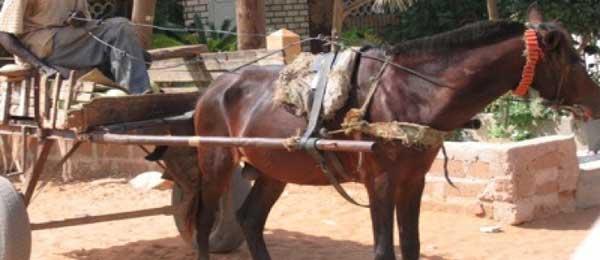 Drame à Guédiawaye: Un charretier étrangle à mort son camarade