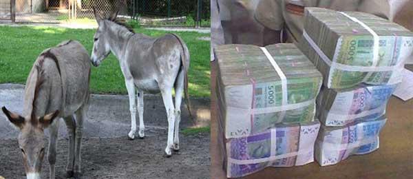 Voleurs d'ânes et voleurs de milliards au Sénégal  (Contribution)