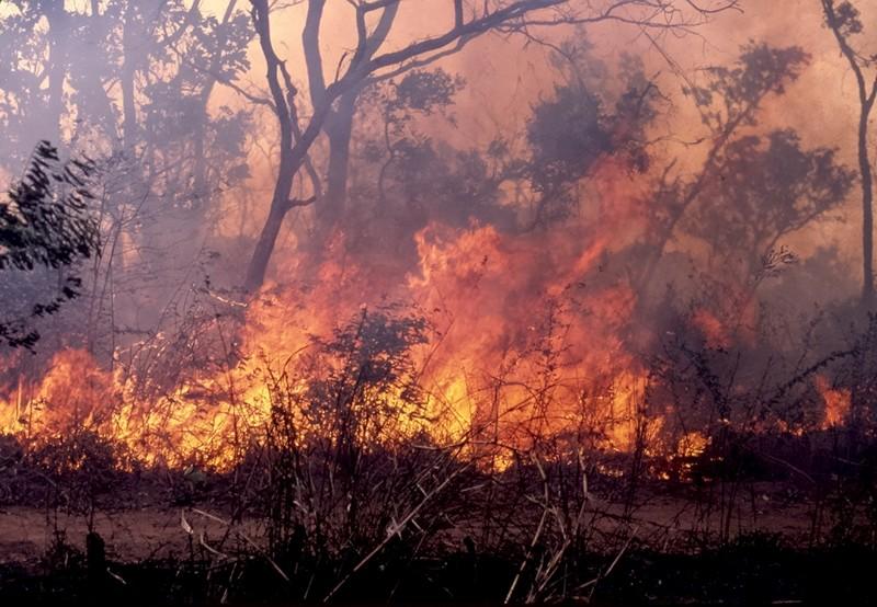 Feux de brousse : 1500 ha ravagés en trois mois dans la région de Louga