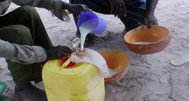Sénégal : le lait local est-il plus taxé que le lait importé ?