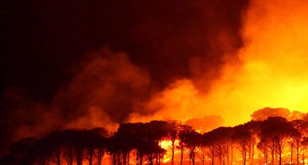 RANCH DE DOLLY : Près  14.000 hectares ravagés par les flammes