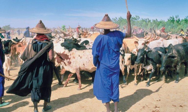 Amadou SOW et Amadou BA vendent leurs bœufs, prennent une charrette et se font voler 880 mille F CFA