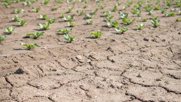 Hivernage 2018: La rareté des pluies hante le sommeil des paysans