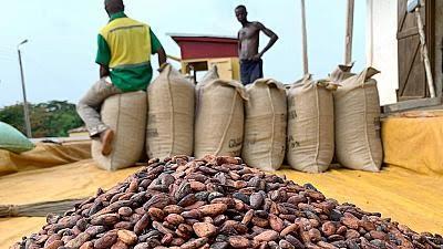 Cacao : Ghana et Côte d'Ivoire suspendent les ventes et exigent un prix minimum