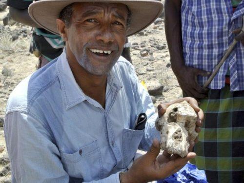 Éthiopie : découverte d'un fossile d'australopithèque de 3,8 millions d'années