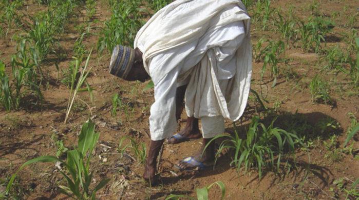 Ndengler : le petit paysannat face à l'agrobusiness (Par Adama DIOUF)