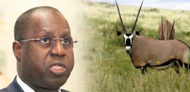 Interpellé sur les gazelles, Abdou Karim SALL parle de l'application de la loi sur le plastique