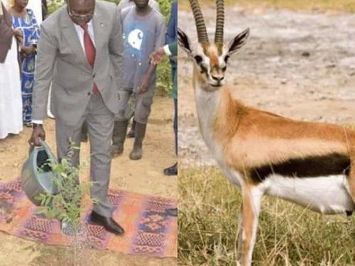 Ranérou en colère exige le retour des Oryx et le remboursement des 2 gazelles mortes