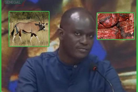 Docteur Cheikh DIENG : les deux gazelles ont été mangées, elles ont fini en steak (vidéo)