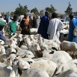 Dame SOW, directeur de l'Elevage : ««Au lendemain de la Tabaski, les moutons invendus à Dakar sont estimés à 64 900»