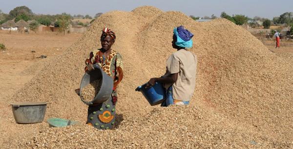 La campagne de commercialisation arachidière dans l'impasse