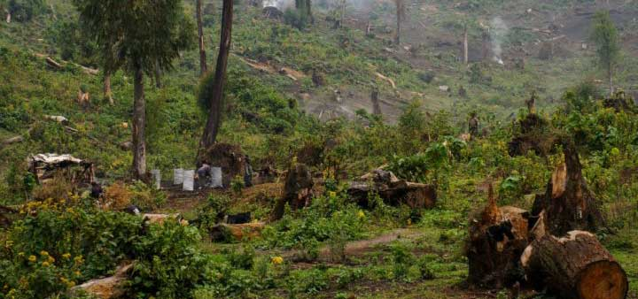 Menaces sur la forêt africaine : Greenpeace épingle le groupe Bolloré