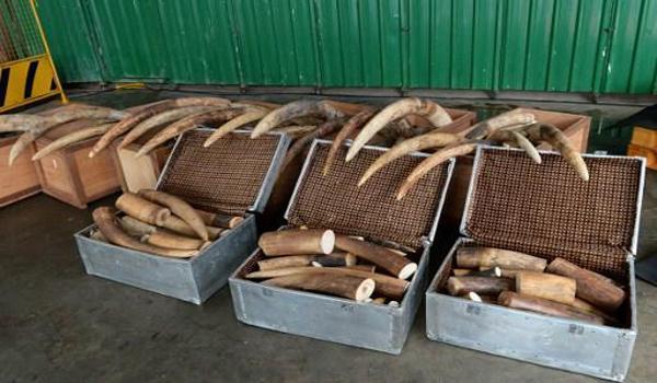 Gabon : le nombre d'éléphants a chuté de 80% en 10 ans