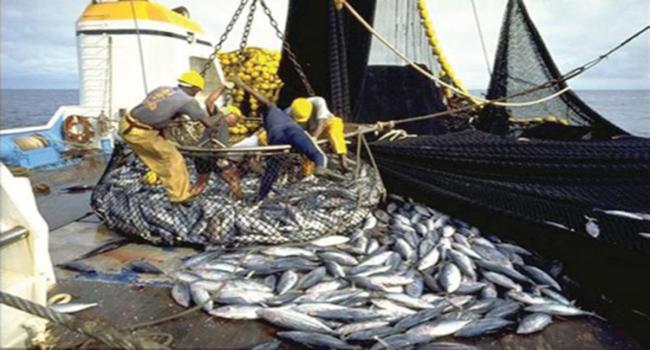 Pêche : Hausse de 15.824 tonnes des débarquements à fin avril 2016 au Sénégal