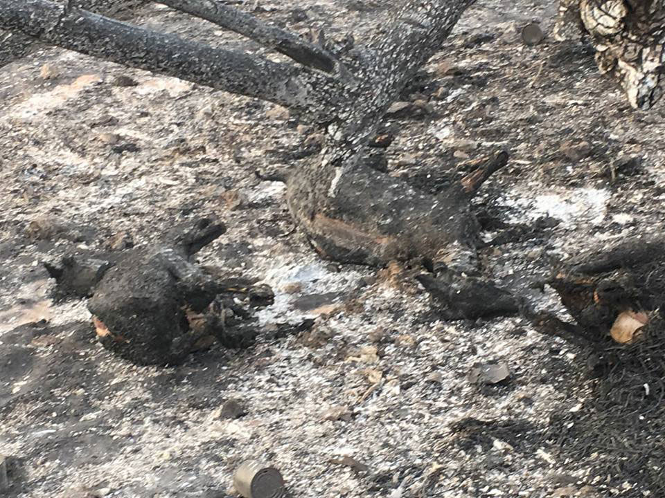Drame de Médina Gounas : le bilan passe à 30 morts
