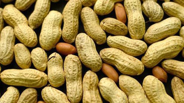Nioro : le Préfet dénonce la vente du quota de semences non pourvu