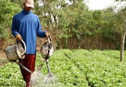MÉVENTE DES PRODUITS HORTICOLES : Les acteurs accusent les ministères du Commerce et de l'Agriculture